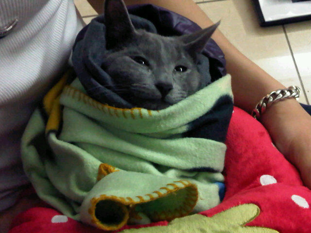Now i want to be a male grayish black cat who s so sick that i have